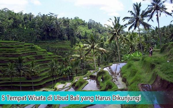 5 Tempat Wisata Di Ubud Bali Yang Harus Dikunjungi Hari
